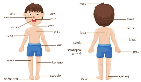 Human Body Parts Name With Picture For Kids